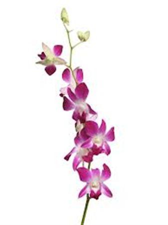 Плантация спб цветы