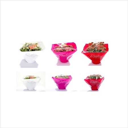 Каланхоэ Cal Mix In Florist Sleeve Bowl