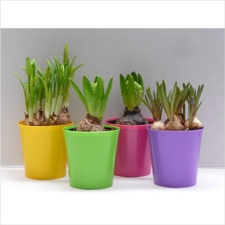 Гиацинт 1pp Mix In Coloured Deco Pot