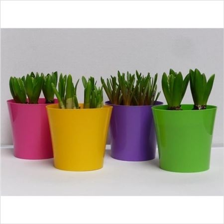 Гиацинт 3pp Mix In Coloured Deco Pot