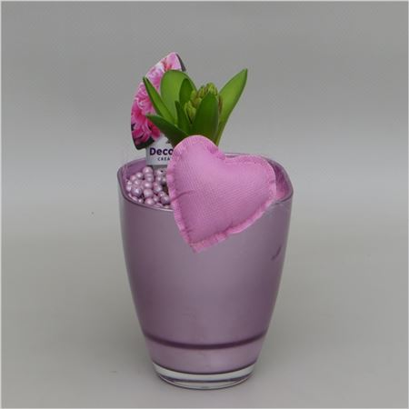 Гиацинт Bombay In Valentine Pot Pink